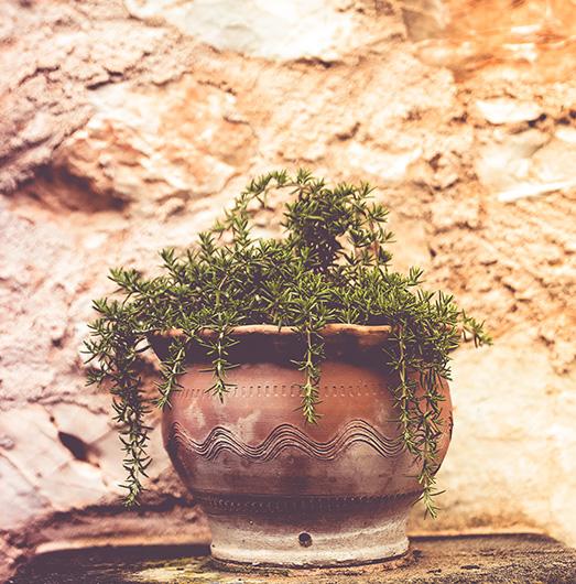 Die Finca Son Mola Vell ist geprägt von Pflanzen und Blütenpracht