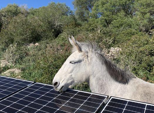 Erneuerbare Energien durch Solarzellen auf der Yoga Finca Son Mola Vell